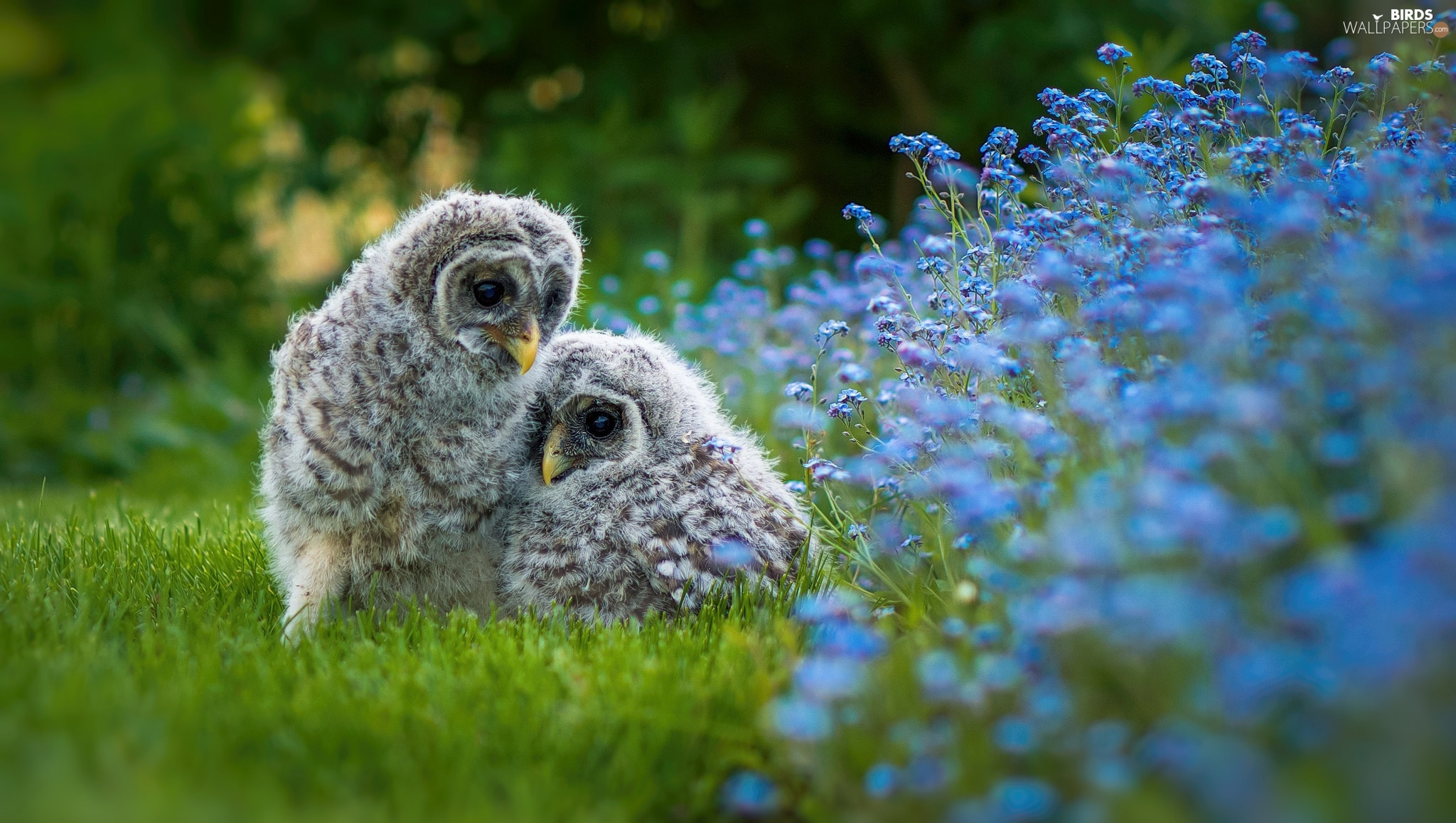 Flowers, owls, chick, birds, grass, Owls