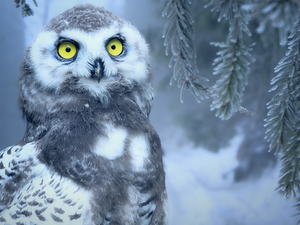 Snowy Owl, Bird, Eyes, twig, Yellow, young