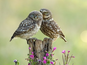 trunk, Flowers, Owls, Little Owl, Two