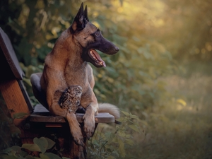 owl, dog, Bench, Plants, Little Owl, Belgian Shepherd Malinois
