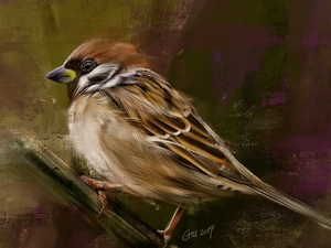 Bird, twig, graphics, sparrow