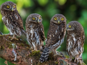 trees, Lod on the beach, Owls, Little Owl, four