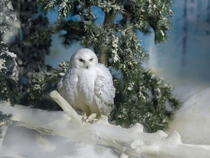 Bird, Twigs, snow, Snowy Owl