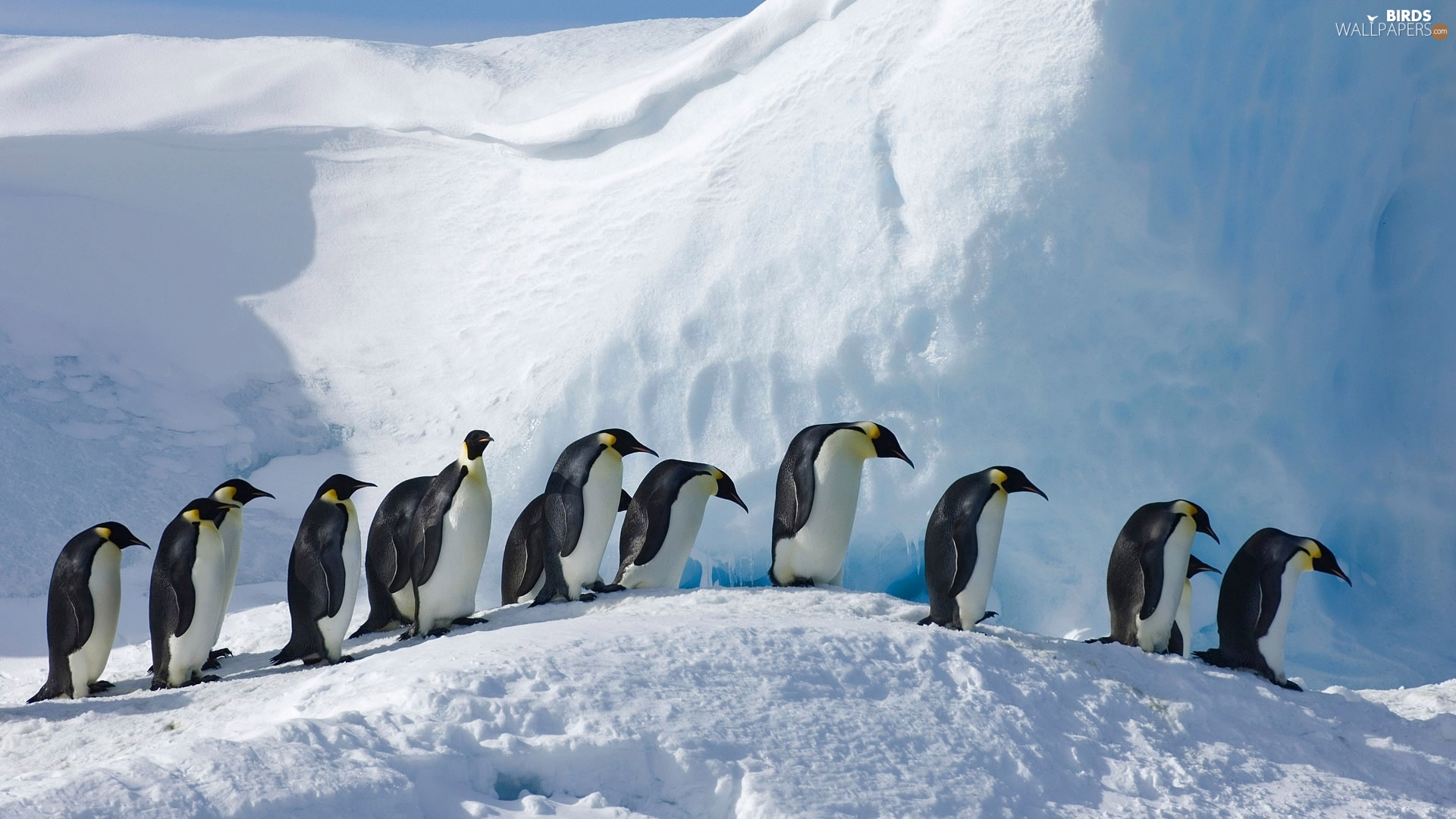winter, birds, Emperor Penguins, snow