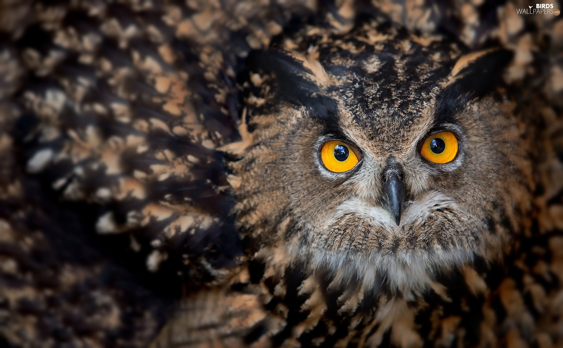 owl, Yellow, Eyes, Eurasian Eagle-Owl